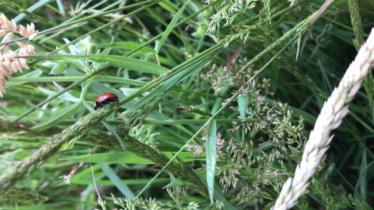 LadybirdFarm